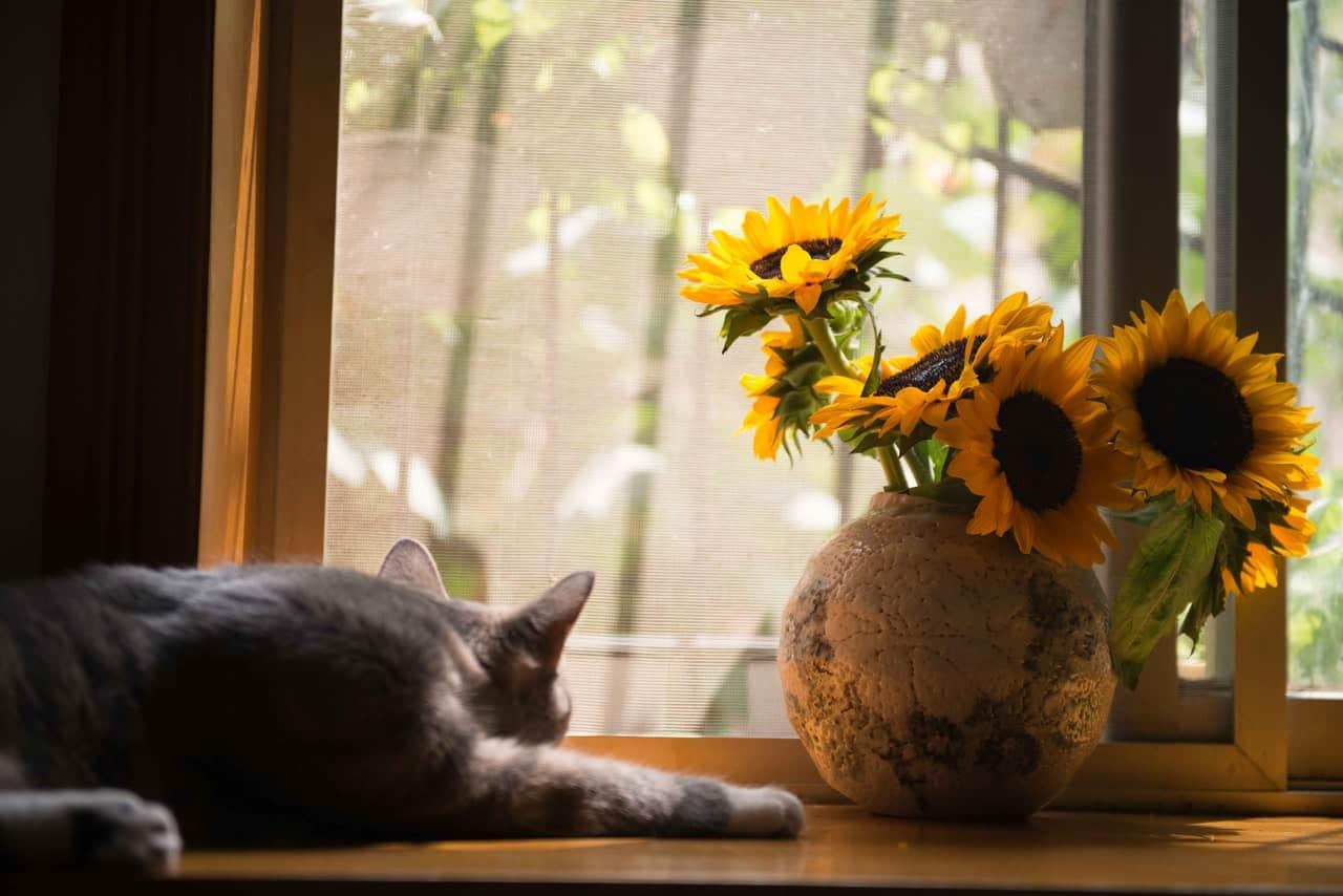 Cum să-ți amenajezi casa dacă ai animale de companie